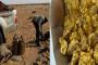 جبهة مرتزقة البوليساريو تستفز المغرب بالتنقيب على الذهب في منطقة تيرس
