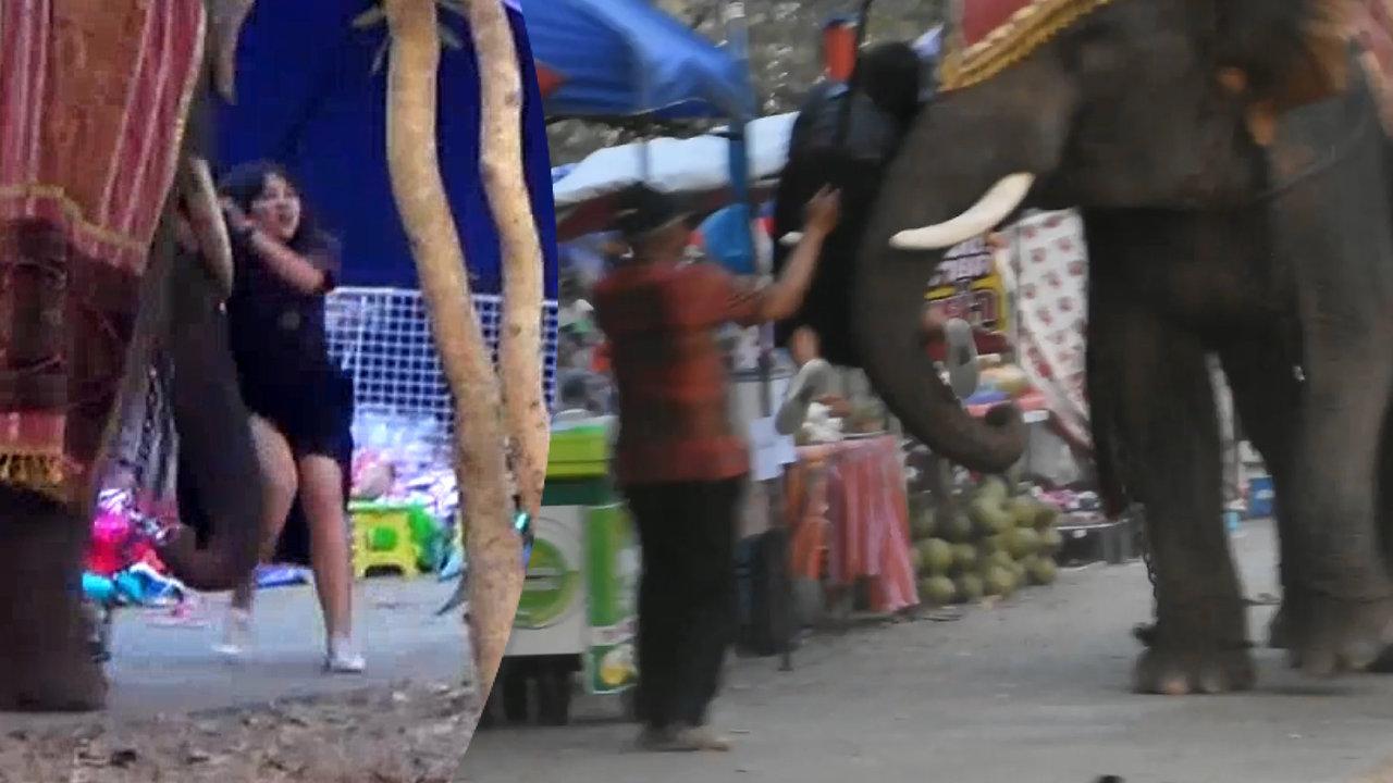 بالفيديو.. فتاة تنجو بأعجوبة من فيل غاضب بعد أن تعلقت في نابه