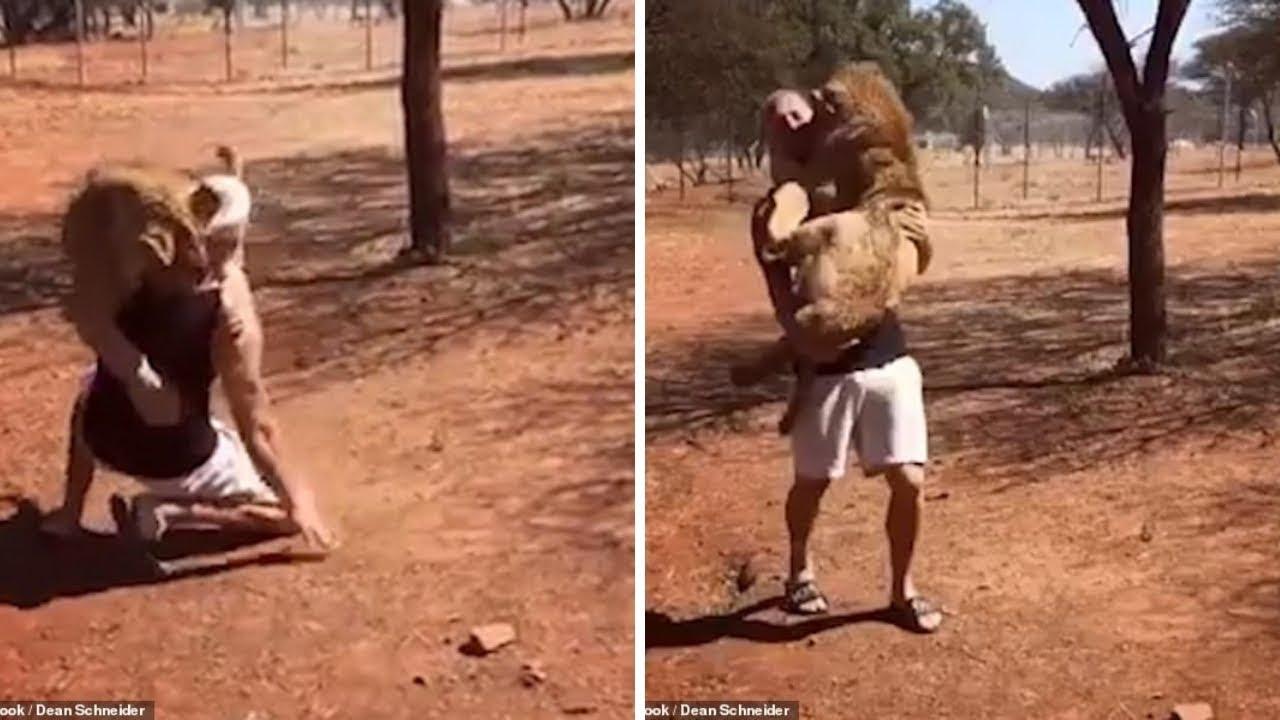 بالفيديو...رجل يحضن أسدا كما لو أنه طفله
