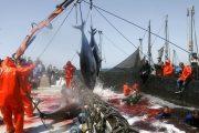 إسبانيا تسعى إلى دخول اتفاقية الصيد حيز التنفيد في أقرب الآجال