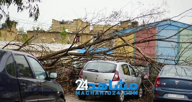 سقوط شجرة داخل مدرسة بالبيضاء يرسل تلميذتين للمستشفى