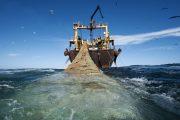 وزارة الفلاحة تستعد لإطلاق نظام جديد لقياس وزن الأسماك المصطادة