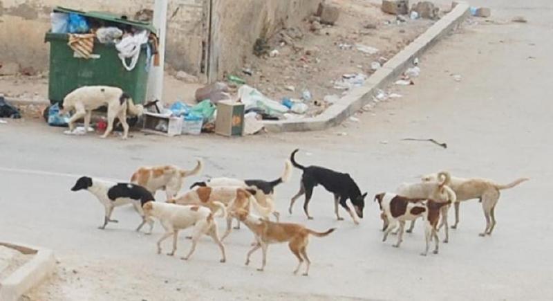 حملة لـ''خصي'' ذكور الكلاب الضالة للحد من تكاثرها