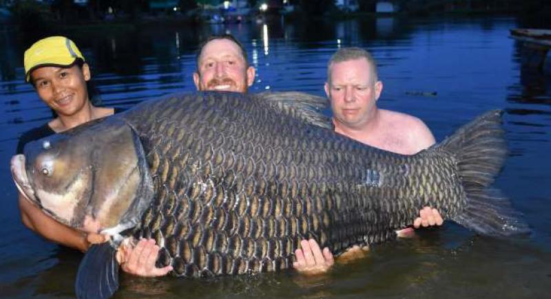وزنها 105 كيلو.. بريطاني يصطاد أضخم سمكة في العالم