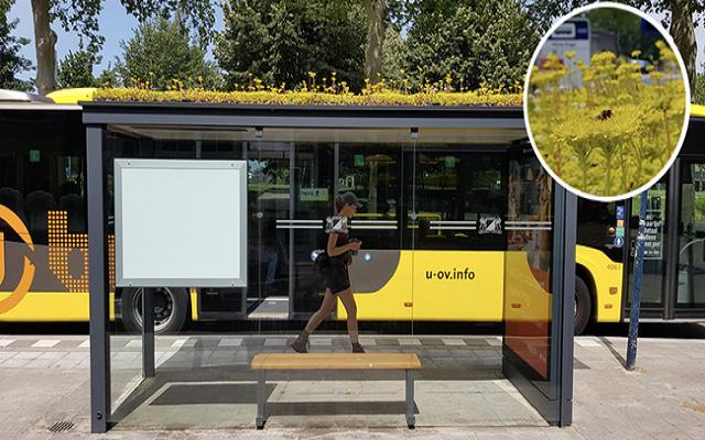 تحويل محطات الحافلات إلى خلايا نحل من اجل تحقيق التوازن البيئي