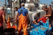 بعد عودة الأسطول الإسباني.. وصول أولى الأسماك المغربية للأسواق الأوربية