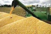 خلال 2018-2019.. حصيلة إنتاج الحبوب وصلت إلى 52 مليون قنطار