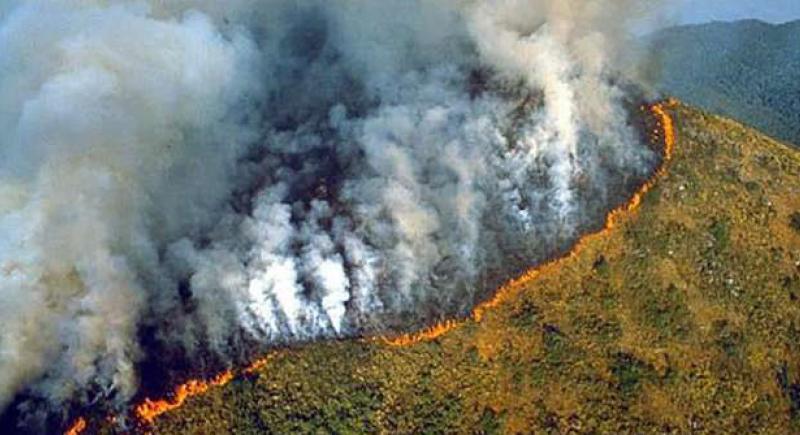 غابات الأمازون.. أرقام وحقائق عن احتراق