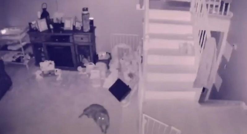شاهد... كاميرات المراقبة توثق مشهدا مرعبا خلال فترة الليل