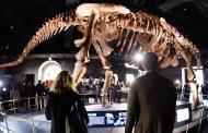 علماء يعثرون على بقايا أقدم نوع من الديناصورات بجبال الأطلس (صور)
