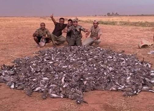 استنكار من قيام سياح خليجيين بقنص أزيد من 1400 طائر بالحوز