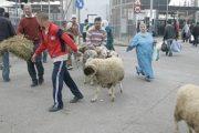 مع اقتراب العيد.. الأضاحي المغربية تخلق الجدل في سبتة ومليلية المحتلتين