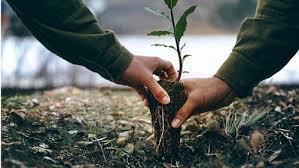 ''أصدقاء البيئة'' تطلق حملة غرس 50 مليون شجرة