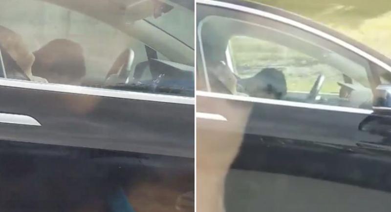 بالفيديو... سائق سيارة غارق في نوم عميق أثناء القيادة على طريق سريع