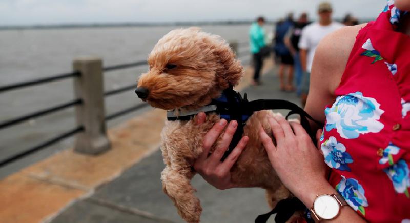 بسبب الفضلات.. دولة أوروبية تفرض ضرائب على تربية الكلاب