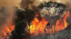 حرائق الغابات تصل المملكة وتأتي على 65 هكتارا من ''عشاشة''