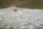 نفوق مئات الأسماك بوادي سوس ماسة يجر الحكومة إلى المساءلة