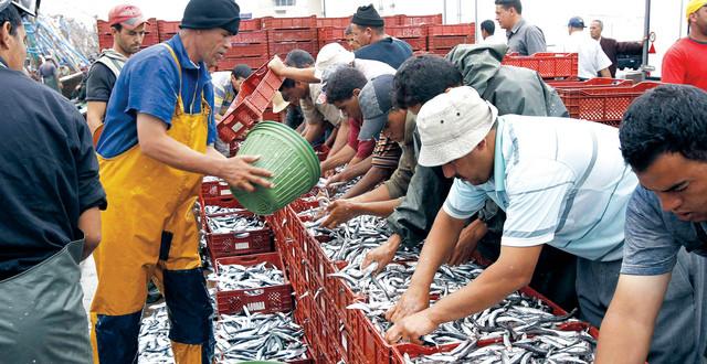 بالأرقام.. ارتفاع كمية الصيد المفرغة بالموانئ المتوسطية للمغرب