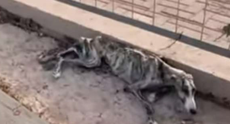 فيديو.. امرأة تنقذ كلبا من الموت بعد وصوله لمرحلة الهيكل العظمي