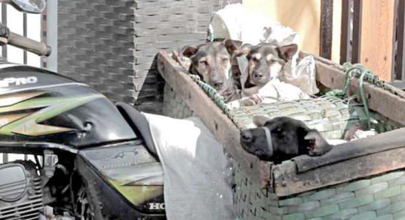 فيديو صادم لكلاب تعامل بطريقة وحشية قبل ذبحها في إندونيسيا