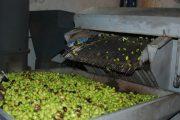 جامعة حقوق المستهلك تدعو للتبليغ عن غشاشي زيت الزيتون