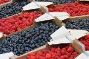 أسعار الفواكه الحمراء تتراجع.. ومنتجون مغاربة يتخوفون من أزمة
