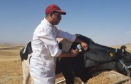 ONSSA يطلق حملة لتلقيح القطيع الوطني ضد الأمراض المعدية