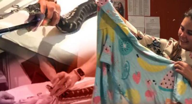 كادت تموت... شاهد عملية إخراج منشفة كبيرة ابتلعتها أفعى (فيديو)