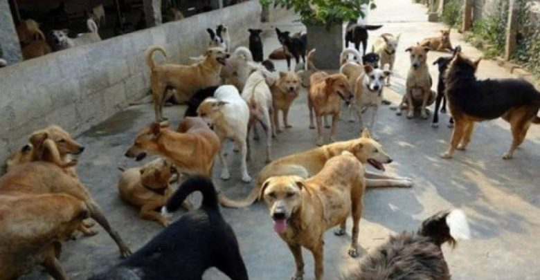 وزارة الصحة تتكلف بعلاج طفل نهشته كلاب ضالة بكلميمة