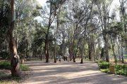 وزارة الفلاحة تكشف برنامجها لمشروع ″غابات المغرب 2020-2030″