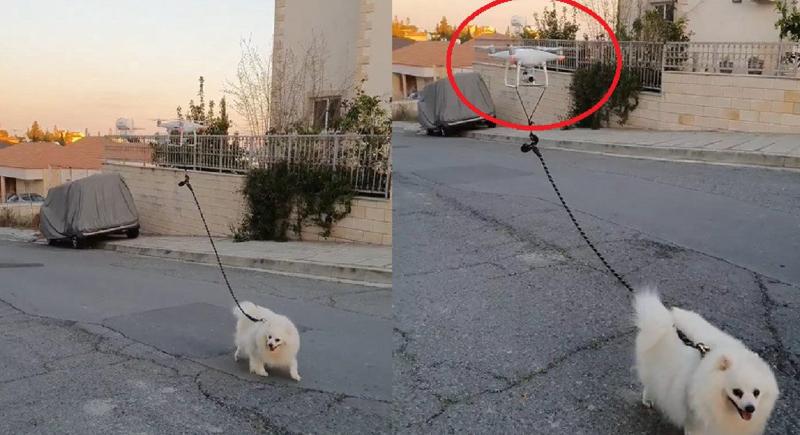 طريقة ذكية لإخراج الكلب للتجول دون الإخلال بنظام الحجر الصحي (فيديو)