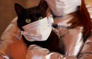 إصابة أول قطة في العالم بفيروس كورونا المستجد