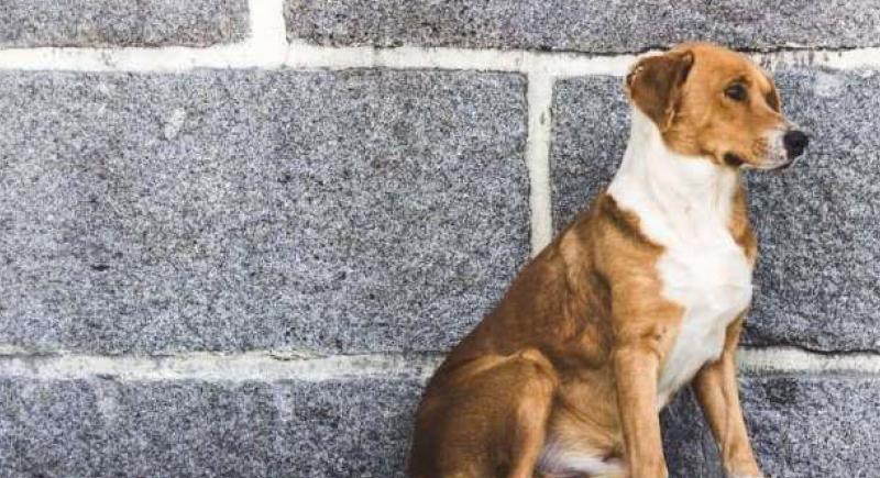 كيف أصبحت هولندا دولة خالية من الكلاب الضالة؟