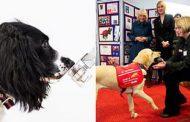 للمساعدة في مكافحة المرض.. تدريب الكلاب على اكتشاف كورونا