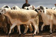 بسبب انحباس المطر.. تخصيص 55 مليون درهم لحماية وإغاثة الماشية