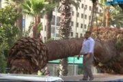 بالفيديو.. اقتلاع أشجار نخيل يشعل احتجاجات المجتمع المدني بالبيضاء