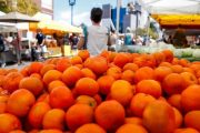 نشطاء يطلقون حملة ضد غلاء أسعار البرتقال