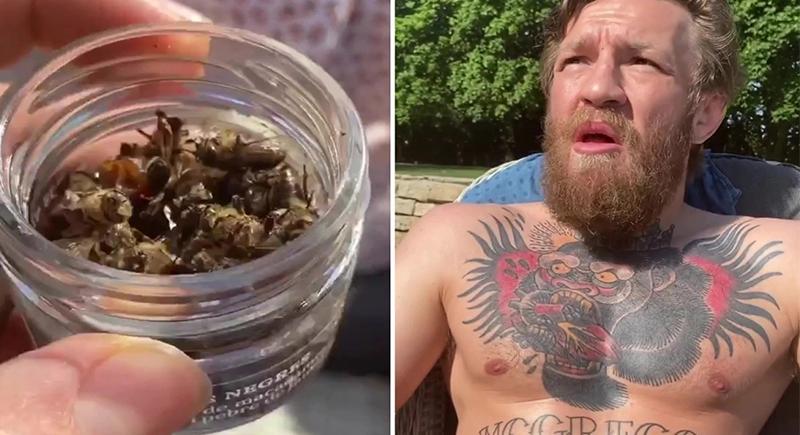 فيديو.. مصارع أيرلندي شهير يفاجىْ متابعيه بأكل نحل مجفف