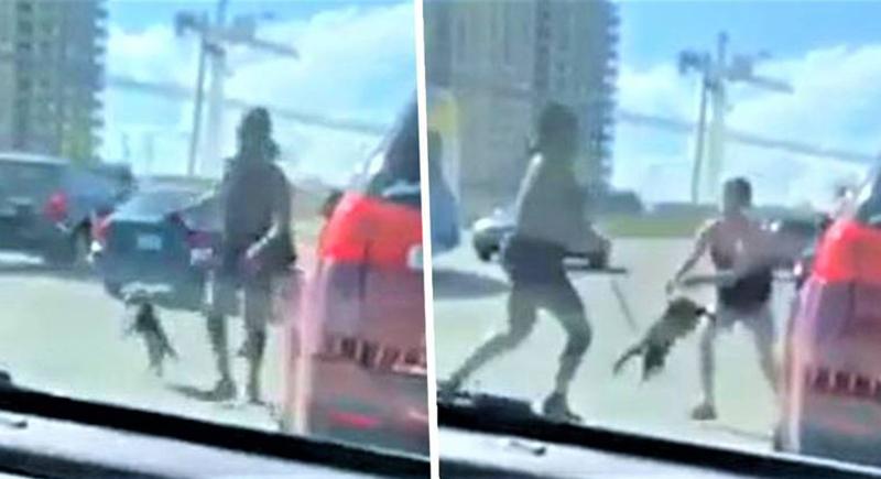 امرأة تسرق كلبا من سيارة وتستخدمه للاعتداء على صاحبته (فيديو)
