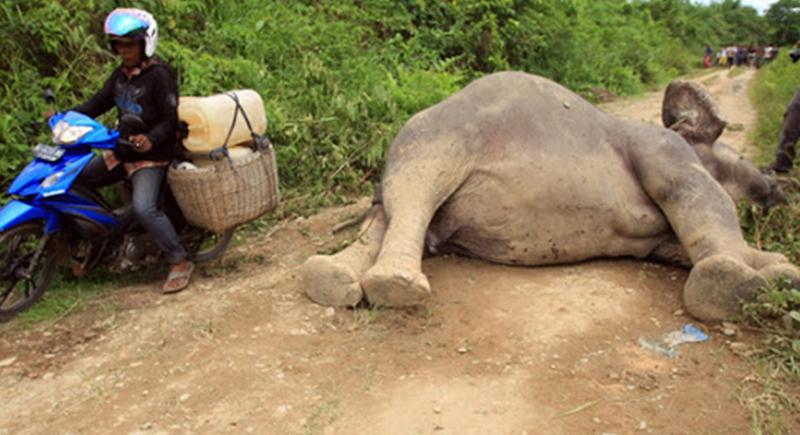 إفريقيا فقدت أكثر من 100 ألف فيل منذ عام 2007 بسبب الصيد الجائر