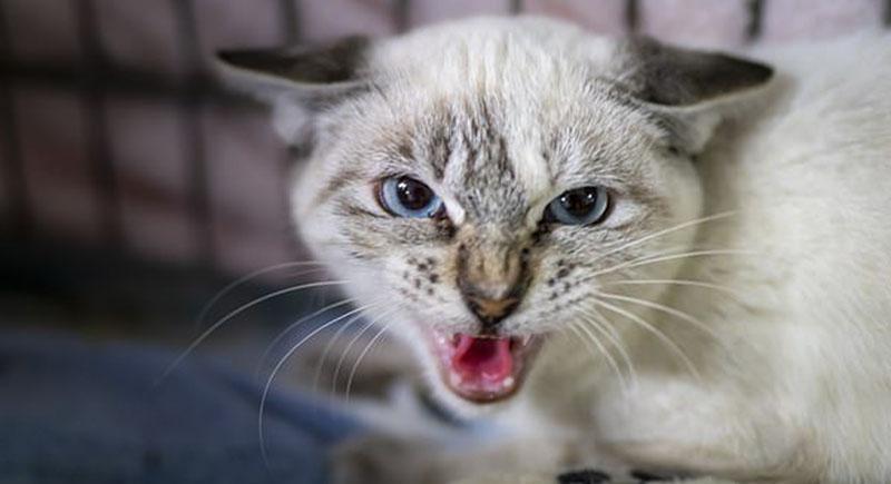 وفاة امرأة بعد أن لحستها قطة!