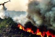 طنجة: السيطرة على حريق أتى على 36 هكتارا من الغابة الدبلوماسية