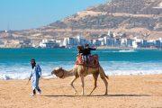 هل تنقذ الإجراءات الحكومية القطاع السياحي من الإفلاس؟