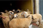 سلطات المحمدية تغلق محلات لبيع أضاحي العيد