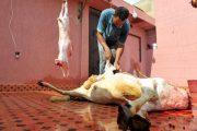 أونسا: العيد مر في ظروف جيدة.. والتحقيق متواصل حول جودة اللحوم