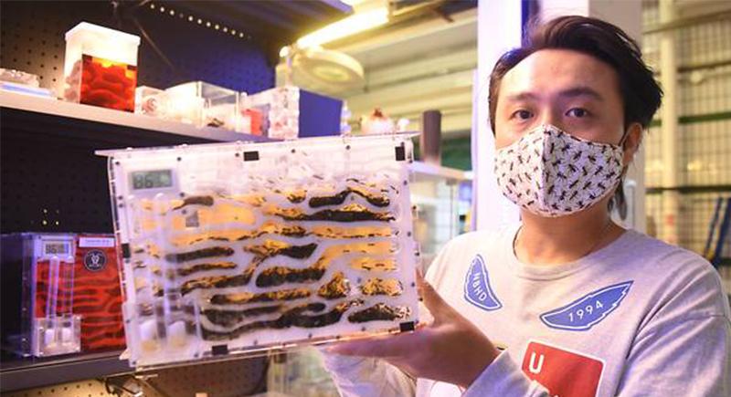 في سنغافورة.. محل لبيع النمل بأكثر من 200 دولار للواحدة !