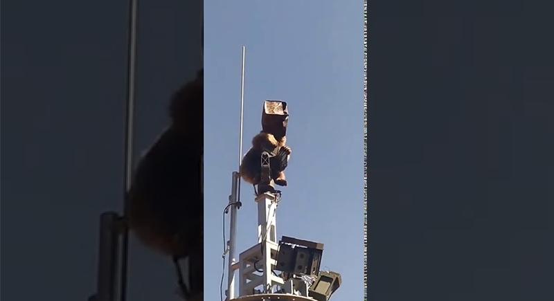 دب يصعد إلى برج اتصالات في قاعدة عسكرية تركية (فيديو)