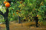 وزارة الفلاحة: الإنتاج المتوقع من الزراعات الخريفية سيلبي احتياجات الاستهلاك والتصدير