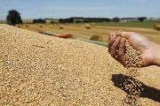 الوكالة الوطنية للموانئ: واردات الحبوب للمملكة بلغت 6,7 مليون طن