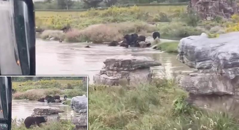 مجموعة من الدببة تقتل عاملا في حديقة حيوان (فيديو)